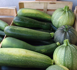 Production Courgettes